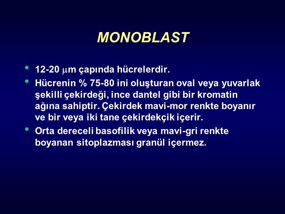 MONOBLAST 12-20 m çapında hücrelerdir.
