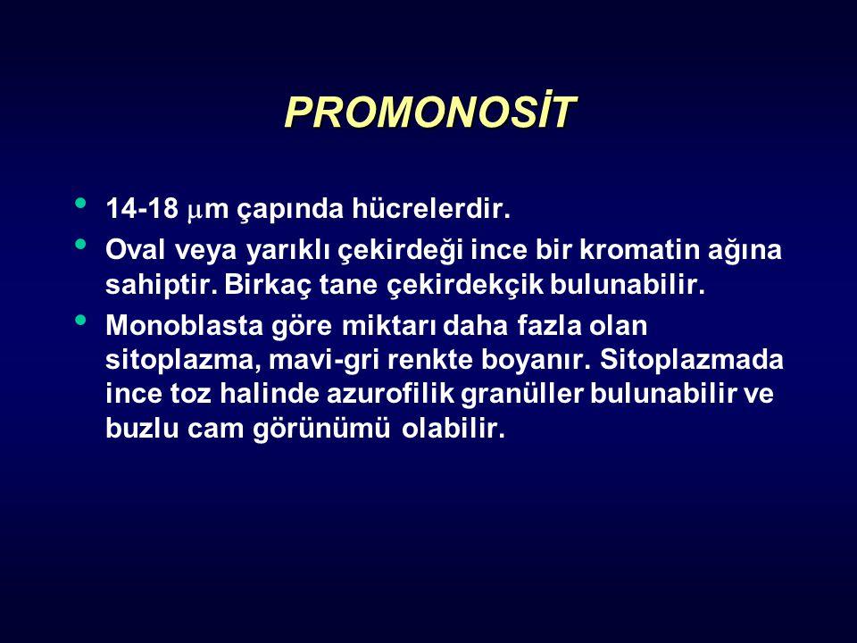 PROMONOSİT 14-18 m çapında hücrelerdir.