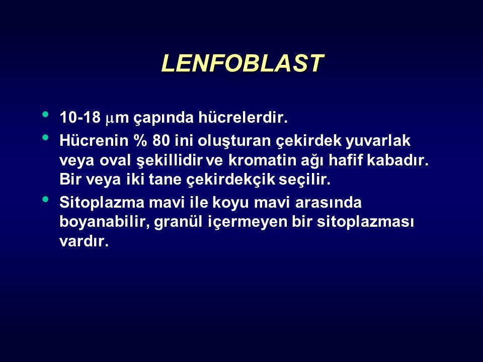 LENFOBLAST 10-18 m çapında hücrelerdir.