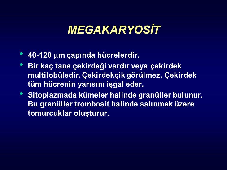 MEGAKARYOSİT 40-120 m çapında hücrelerdir.