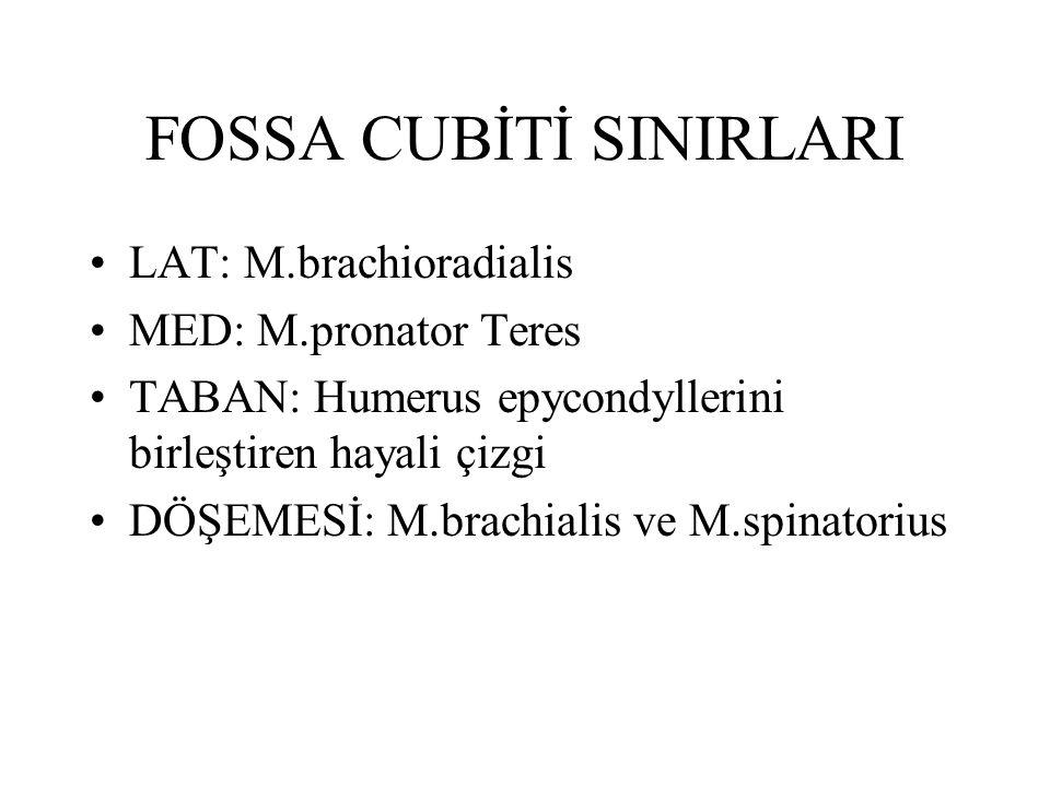 FOSSA CUBİTİ SINIRLARI