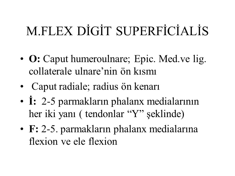 M.FLEX DİGİT SUPERFİCİALİS
