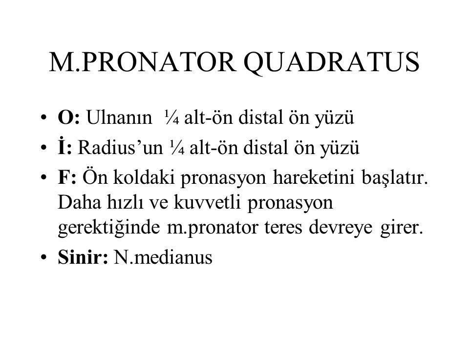 M.PRONATOR QUADRATUS O: Ulnanın ¼ alt-ön distal ön yüzü