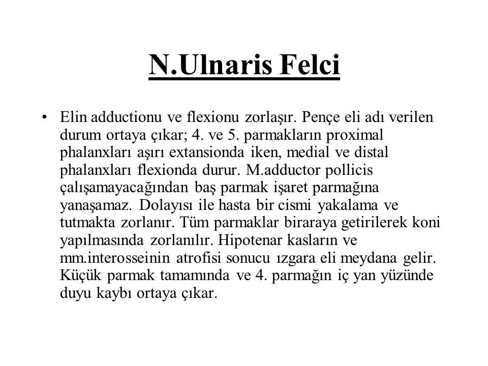 N.Ulnaris Felci