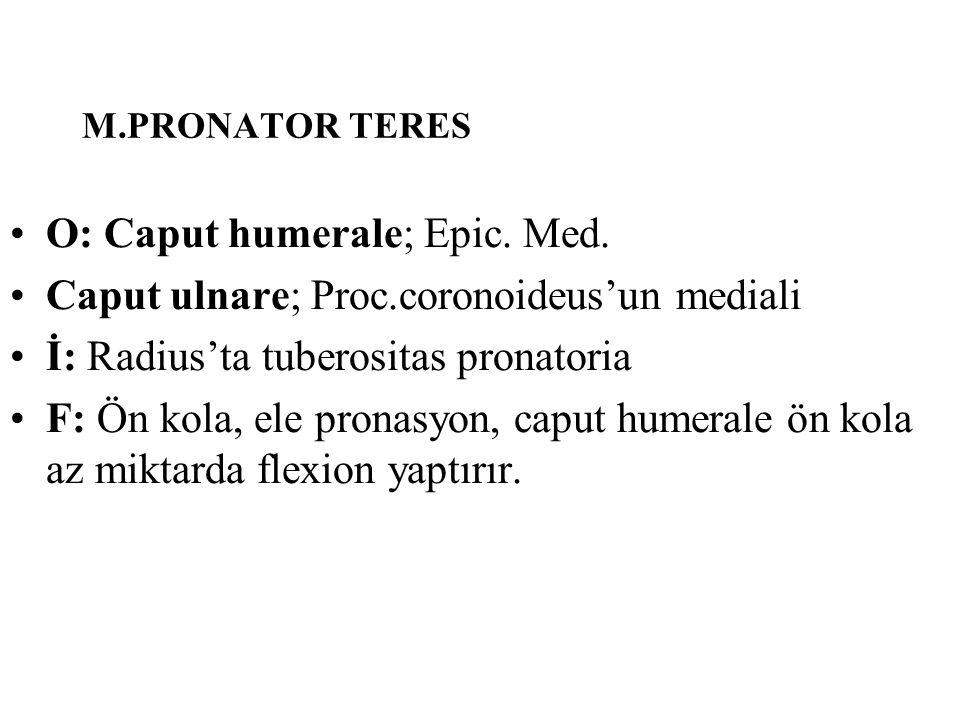 O: Caput humerale; Epic. Med.