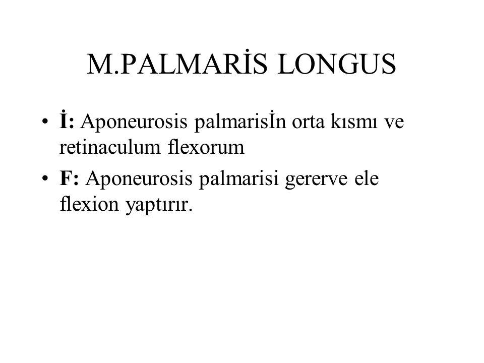 M.PALMARİS LONGUS İ: Aponeurosis palmarisİn orta kısmı ve retinaculum flexorum.
