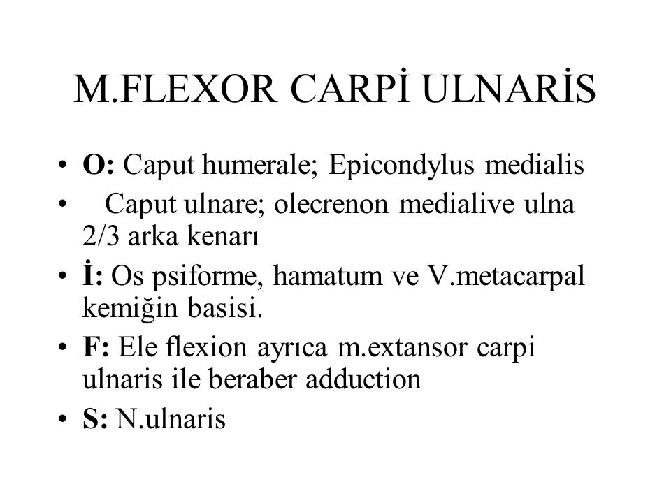 M.FLEXOR CARPİ ULNARİS O: Caput humerale; Epicondylus medialis