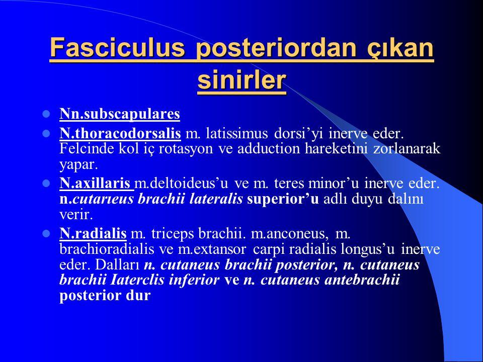 Fasciculus posteriordan çıkan sinirler