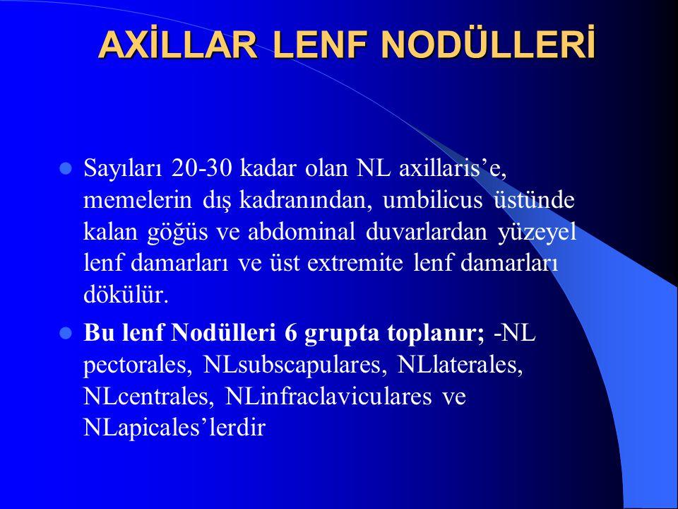 AXİLLAR LENF NODÜLLERİ
