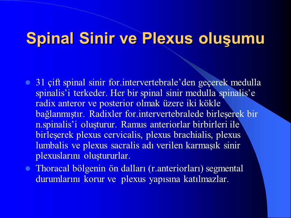 Spinal Sinir ve Plexus oluşumu