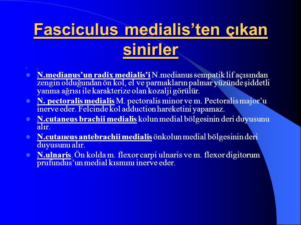 Fasciculus medialis'ten çıkan sinirler