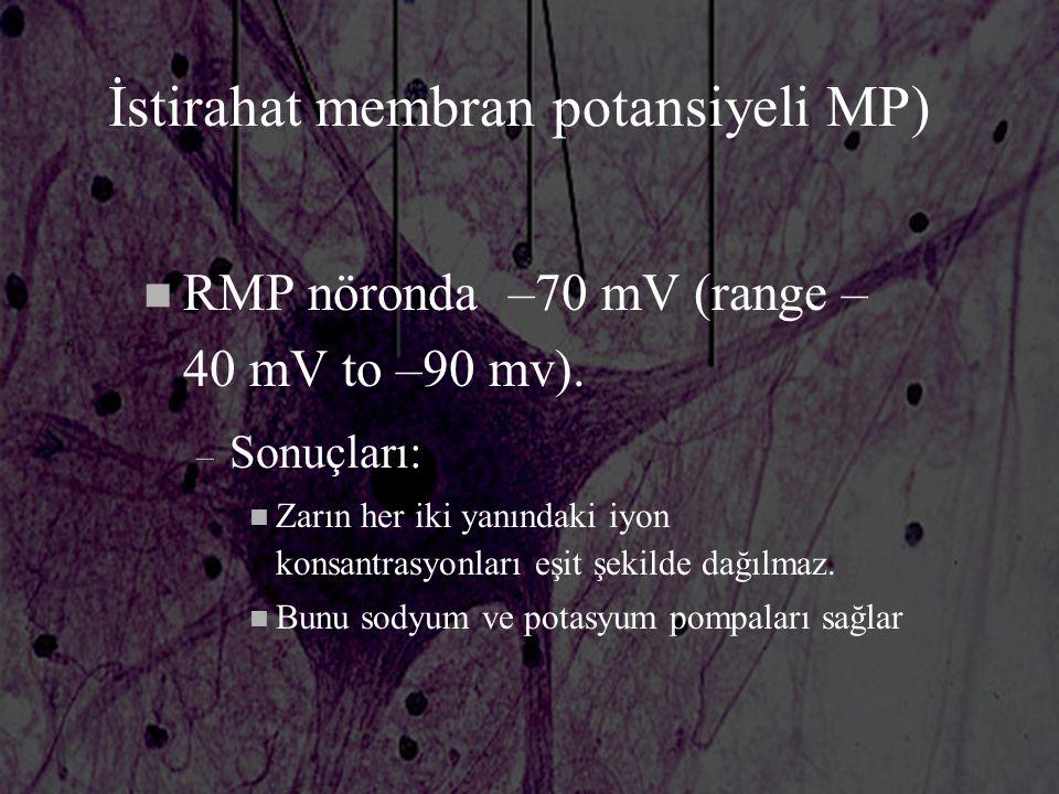 İstirahat membran potansiyeli MP)