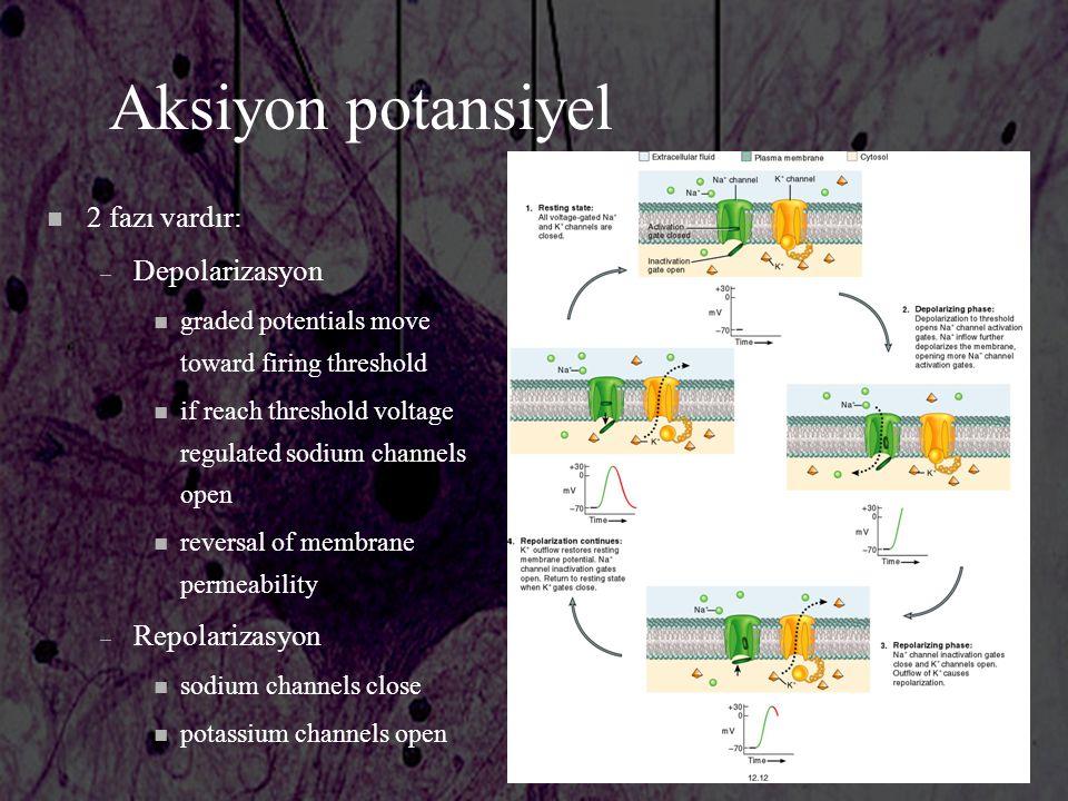 Aksiyon potansiyel 2 fazı vardır: Depolarizasyon Repolarizasyon