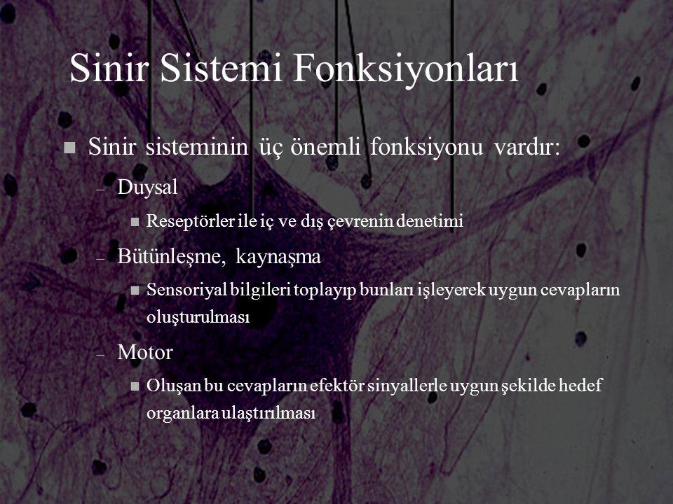 Sinir Sistemi Fonksiyonları