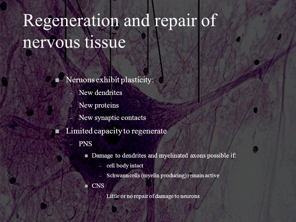 Regeneration and repair of nervous tissue