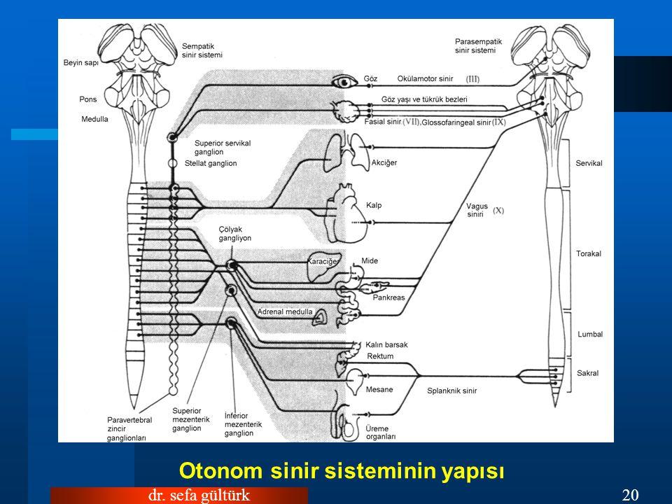 Otonom sinir sisteminin yapısı