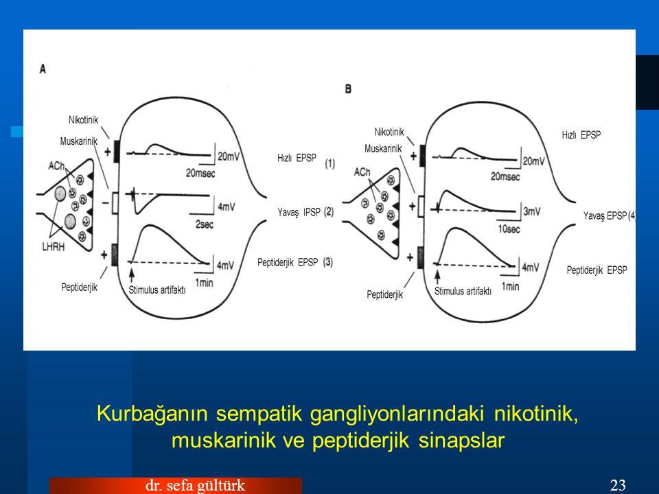 Kurbağanın sempatik gangliyonlarındaki nikotinik, muskarinik ve peptiderjik sinapslar