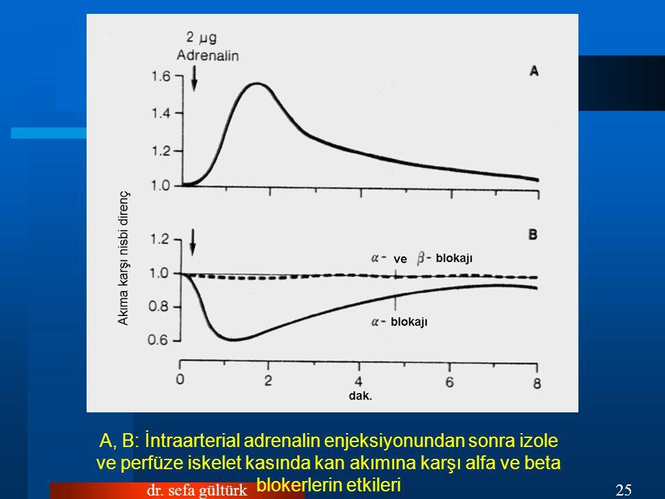 A, B: İntraarterial adrenalin enjeksiyonundan sonra izole ve perfüze iskelet kasında kan akımına karşı alfa ve beta blokerlerin etkileri