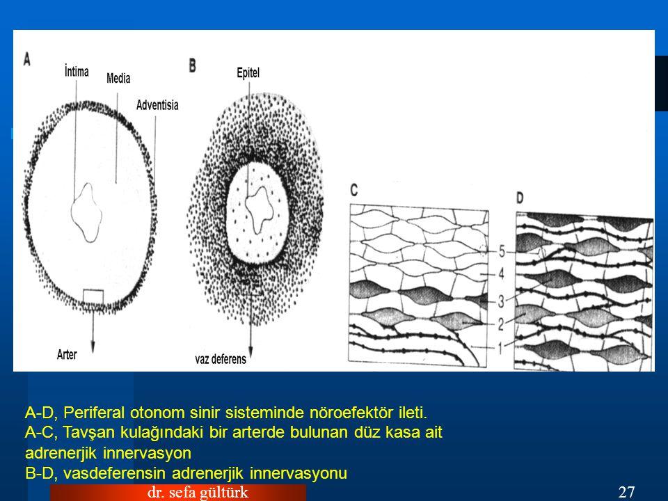 A-D, Periferal otonom sinir sisteminde nöroefektör ileti.