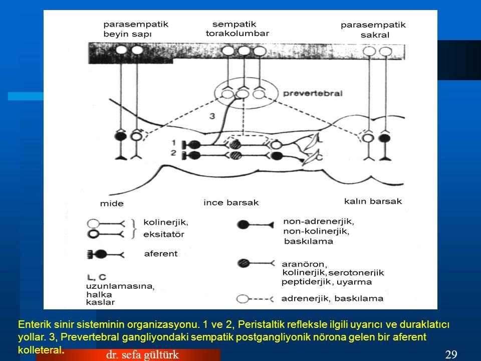 Enterik sinir sisteminin organizasyonu