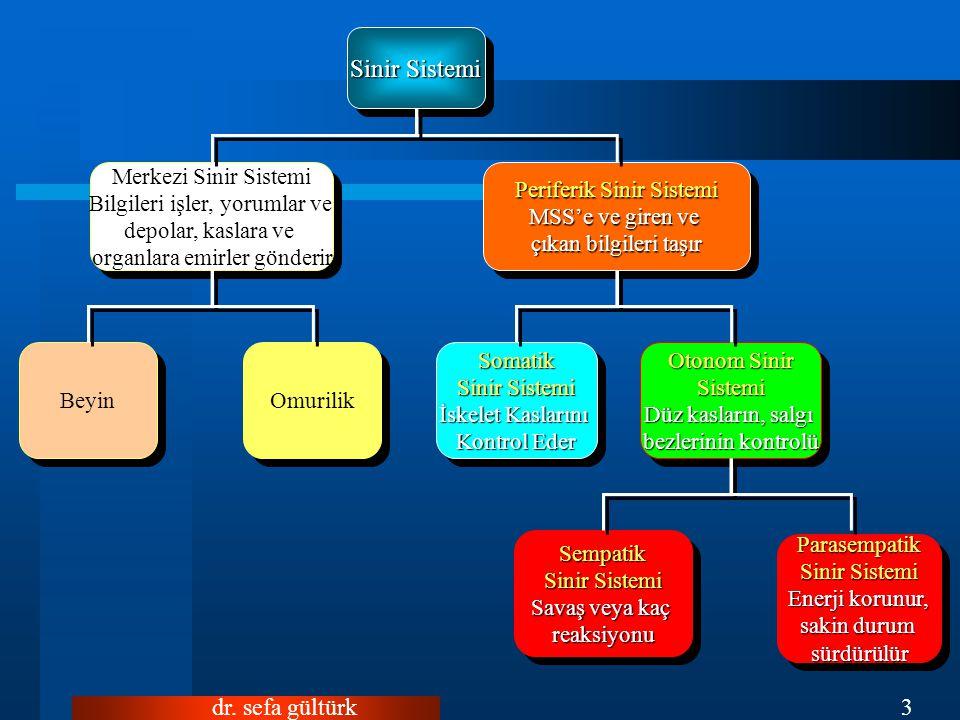 Sinir Sistemi dr. sefa gültürk Merkezi Sinir Sistemi