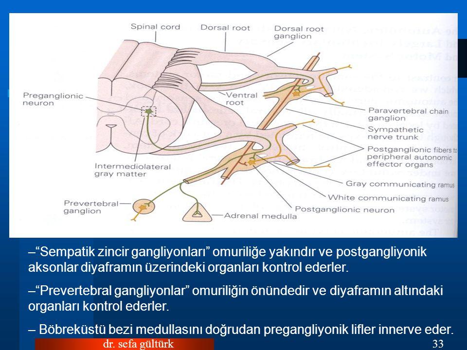 Sempatik zincir gangliyonları omuriliğe yakındır ve postgangliyonik aksonlar diyaframın üzerindeki organları kontrol ederler.