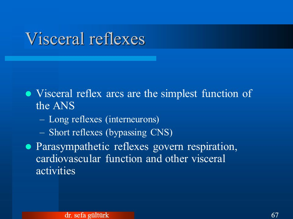 Visceral reflexes Visceral reflex arcs are the simplest function of the ANS. Long reflexes (interneurons)