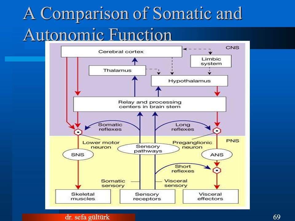 A Comparison of Somatic and Autonomic Function