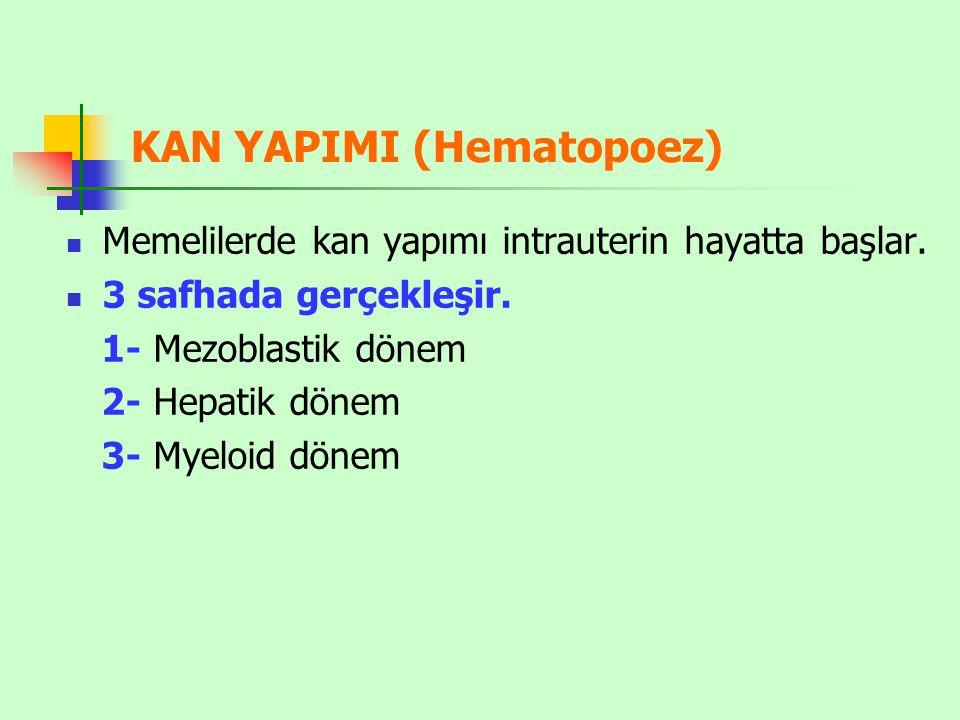 KAN YAPIMI (Hematopoez)