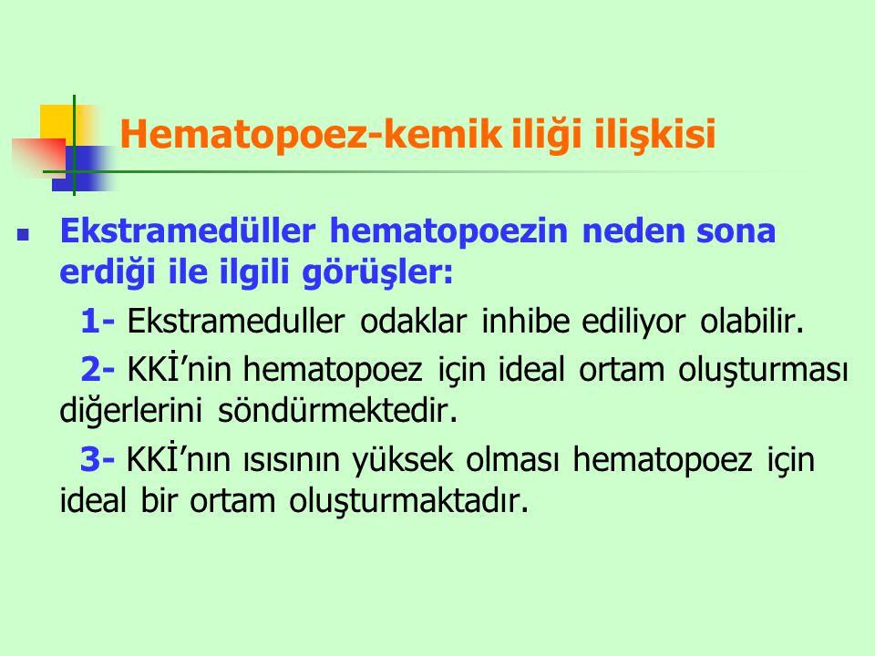 Hematopoez-kemik iliği ilişkisi