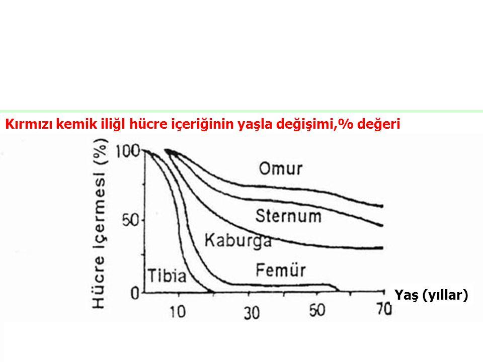 Kırmızı kemik iliğl hücre içeriğinin yaşla değişimi,% değeri