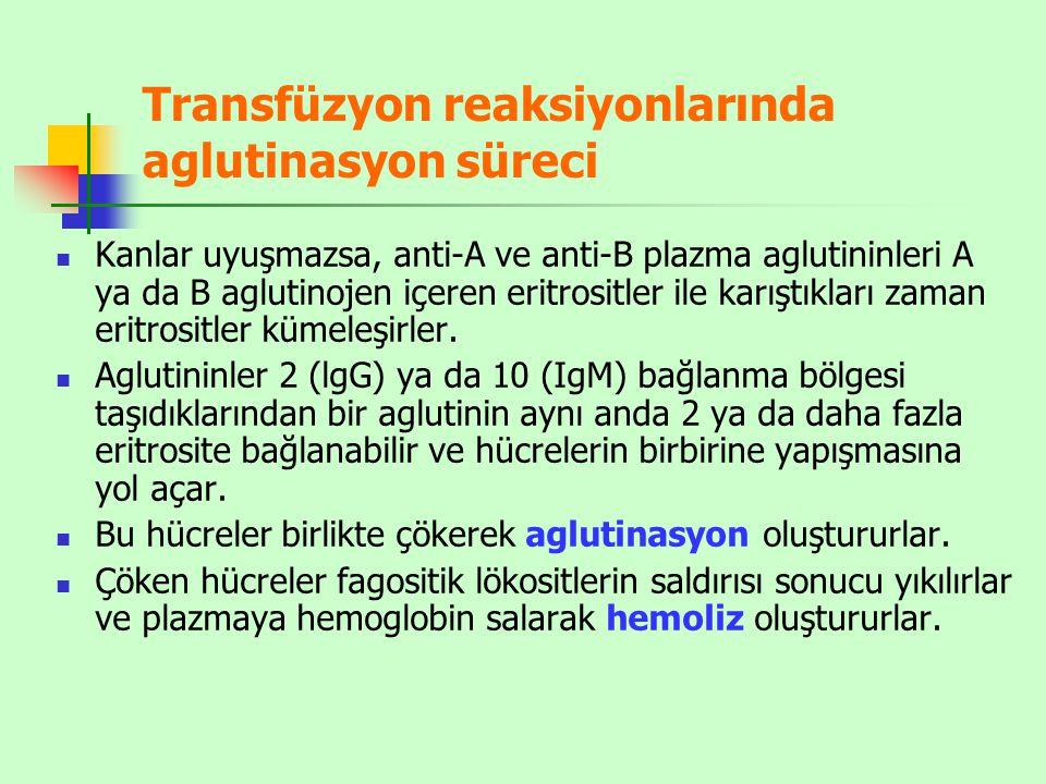 Transfüzyon reaksiyonlarında aglutinasyon süreci