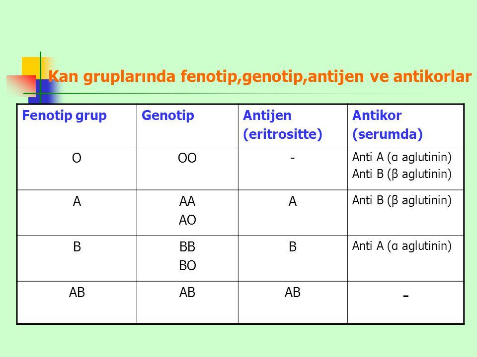 Kan gruplarında fenotip,genotip,antijen ve antikorlar