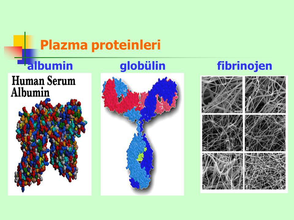 Plazma proteinleri albumin globülin fibrinojen