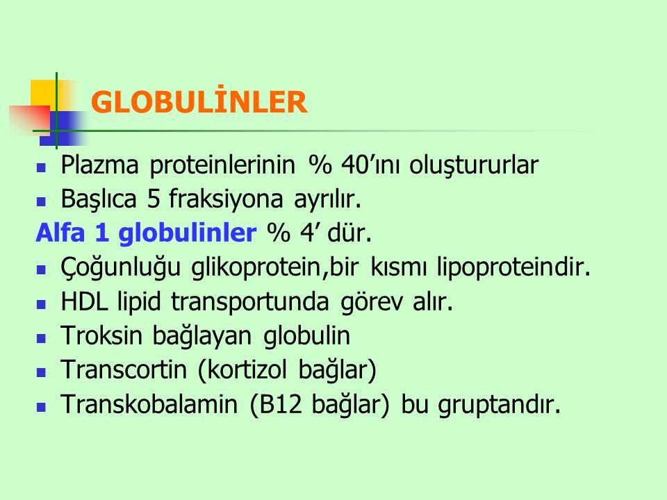 GLOBULİNLER Plazma proteinlerinin % 40'ını oluştururlar