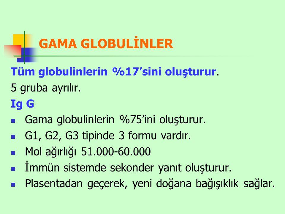 GAMA GLOBULİNLER Tüm globulinlerin %17'sini oluşturur.