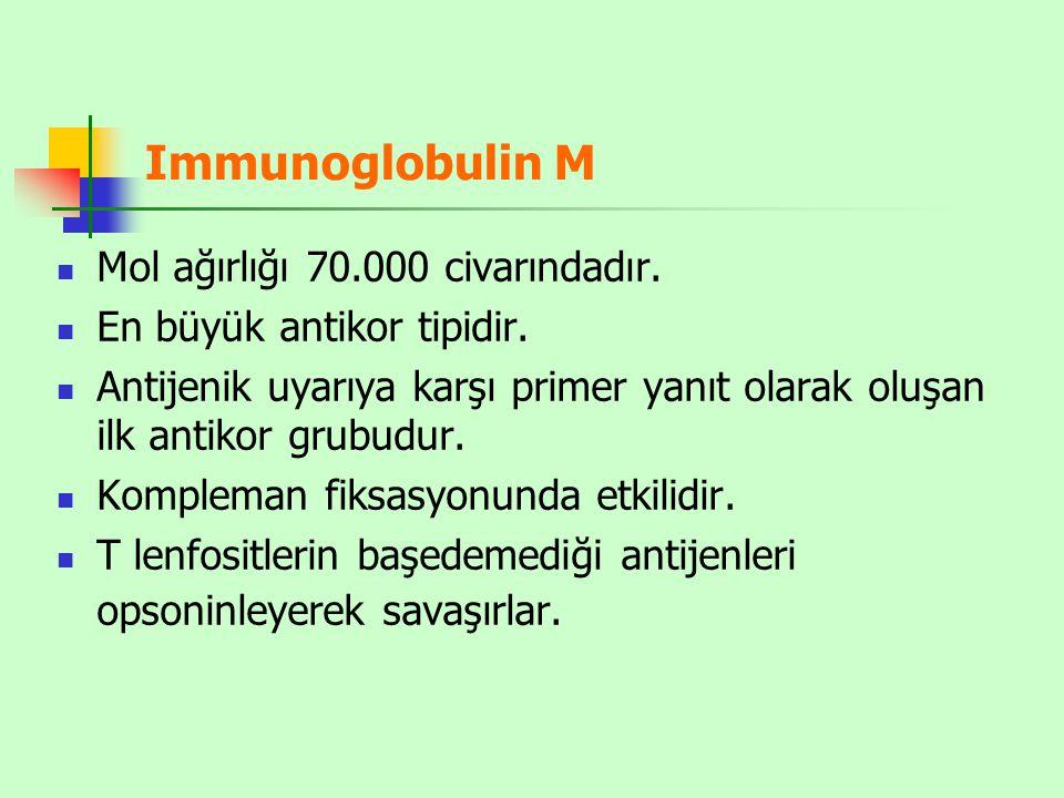 Immunoglobulin M Mol ağırlığı 70.000 civarındadır.