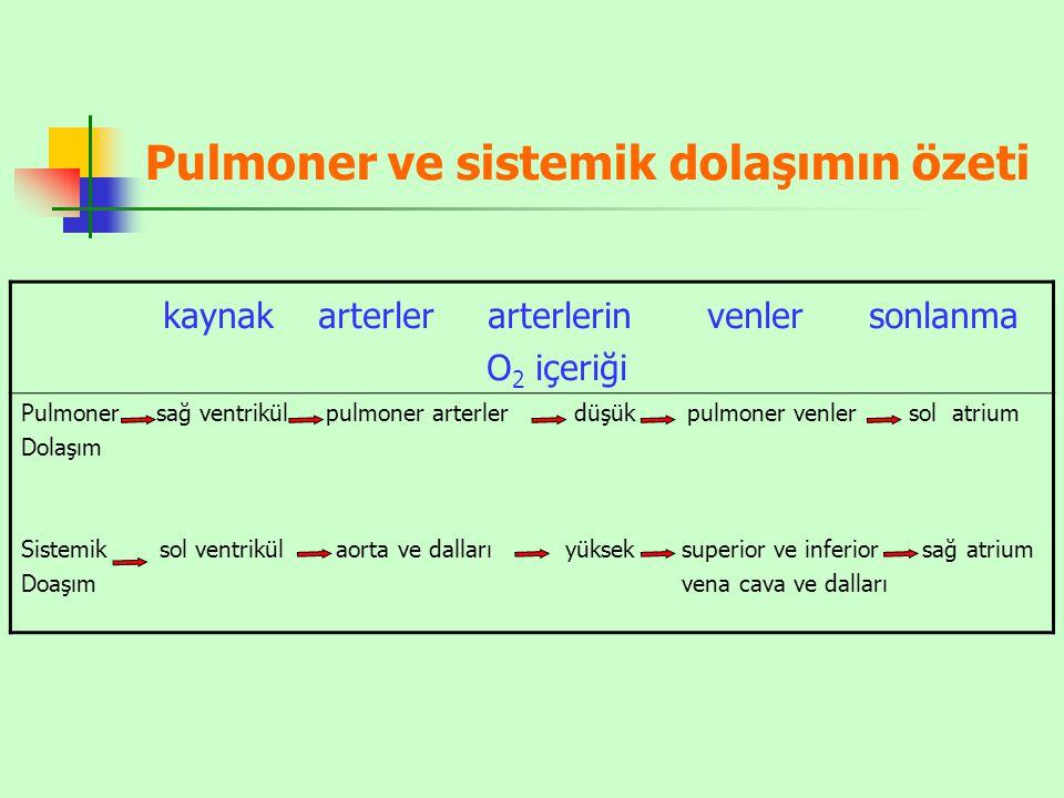 Pulmoner ve sistemik dolaşımın özeti