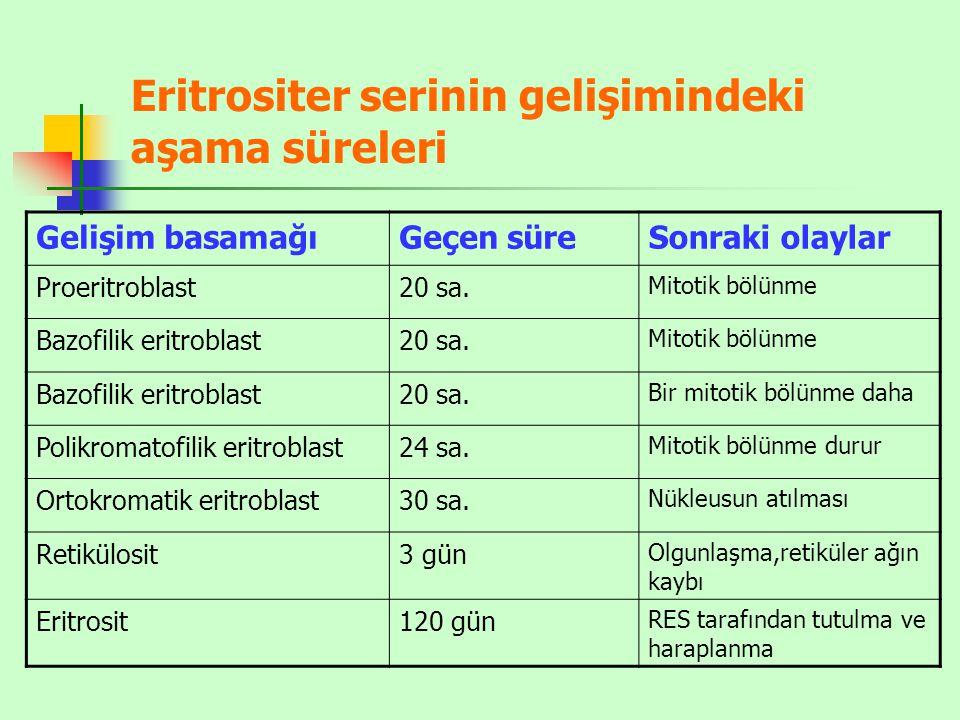 Eritrositer serinin gelişimindeki aşama süreleri