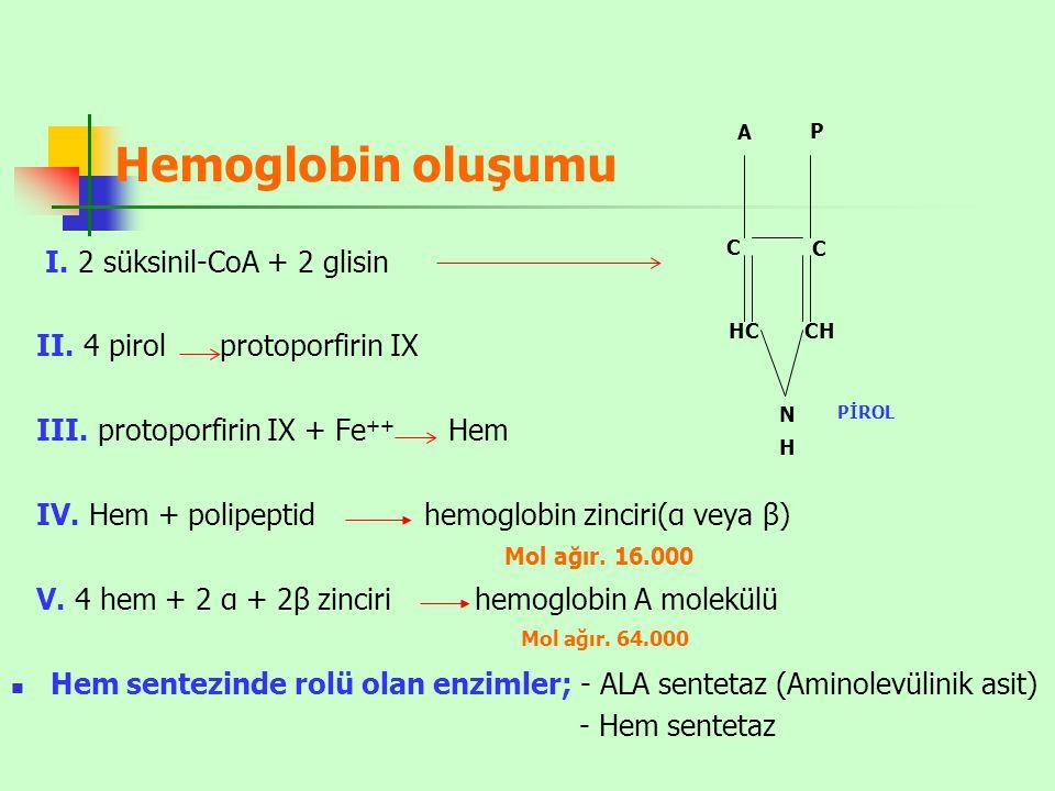 Hemoglobin oluşumu I. 2 süksinil-CoA + 2 glisin