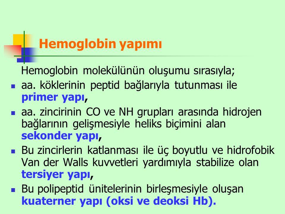 Hemoglobin yapımı Hemoglobin molekülünün oluşumu sırasıyla;