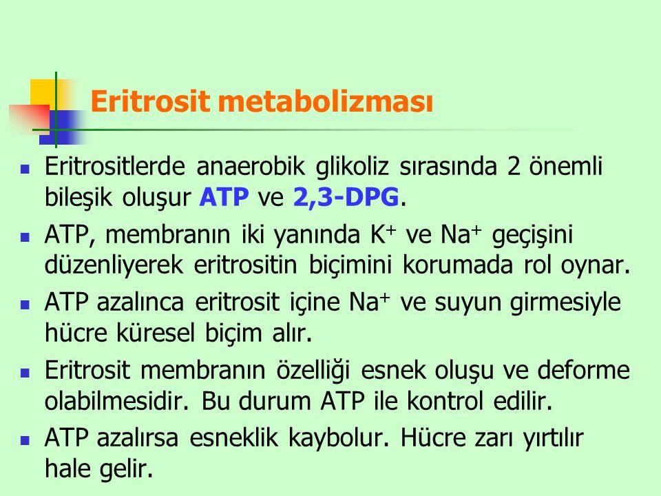 Eritrosit metabolizması