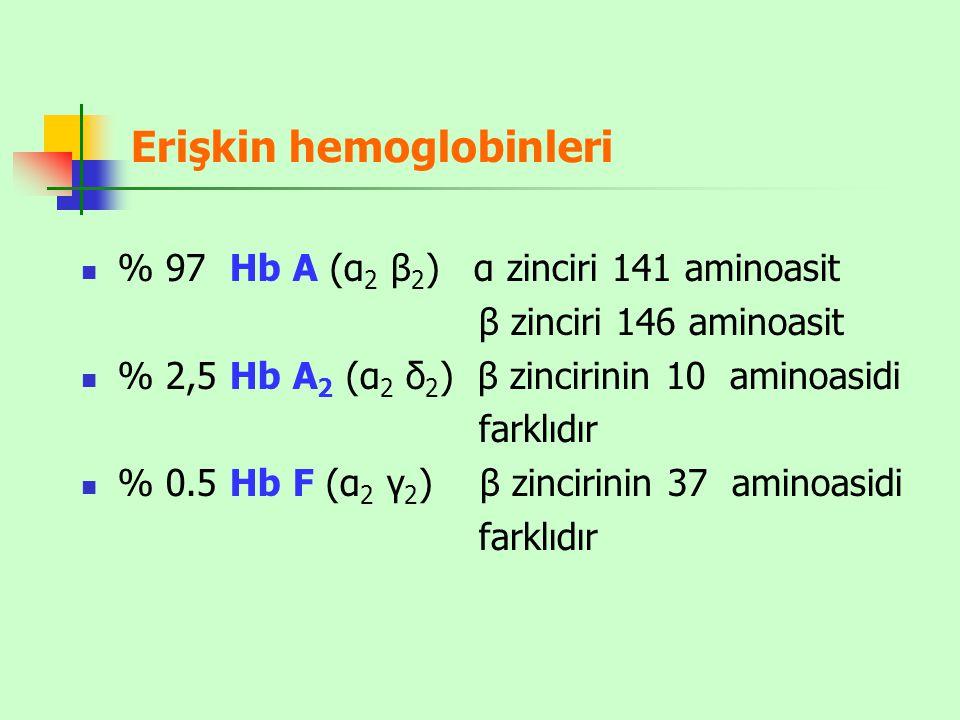 Erişkin hemoglobinleri
