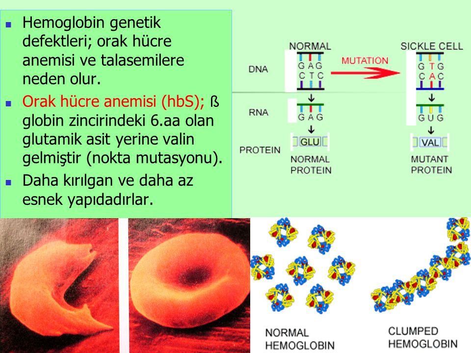 Hemoglobin genetik defektleri; orak hücre anemisi ve talasemilere neden olur.