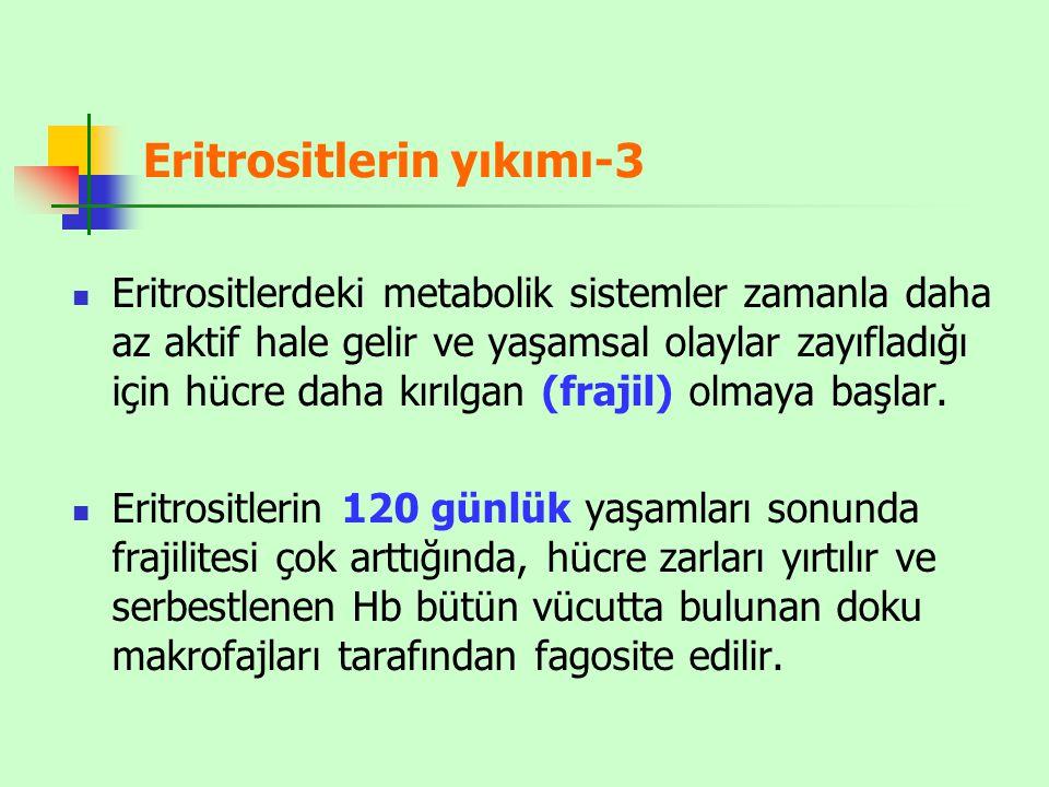 Eritrositlerin yıkımı-3