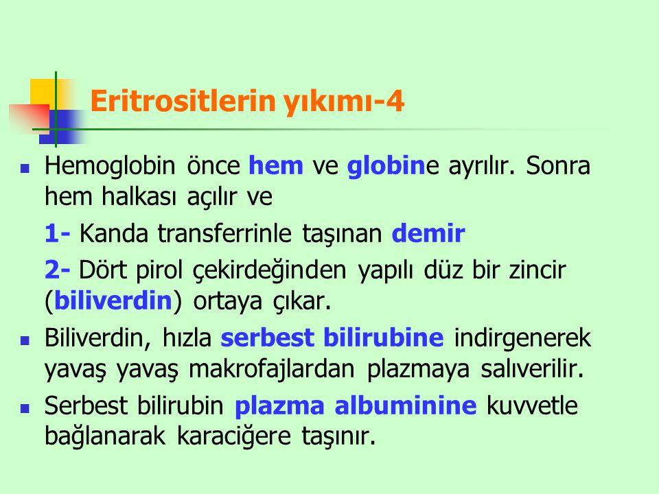 Eritrositlerin yıkımı-4