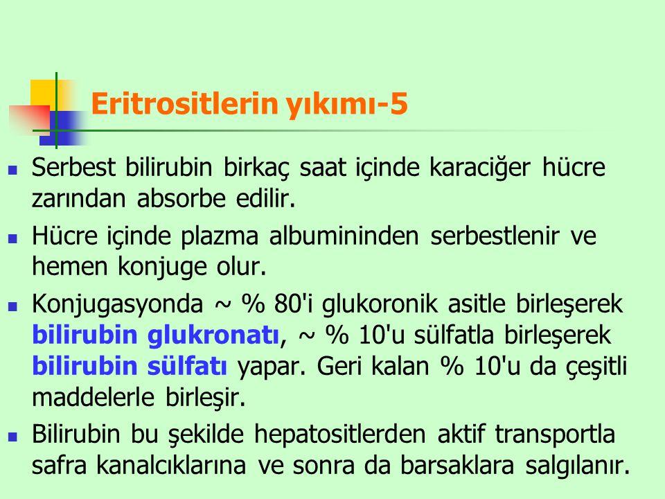 Eritrositlerin yıkımı-5