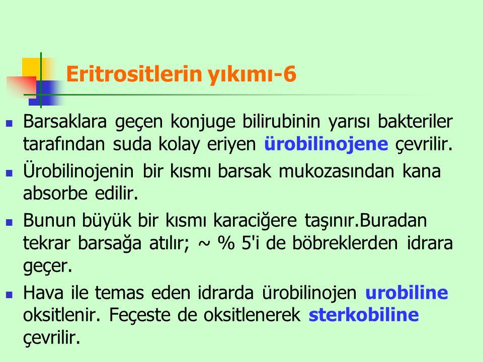 Eritrositlerin yıkımı-6