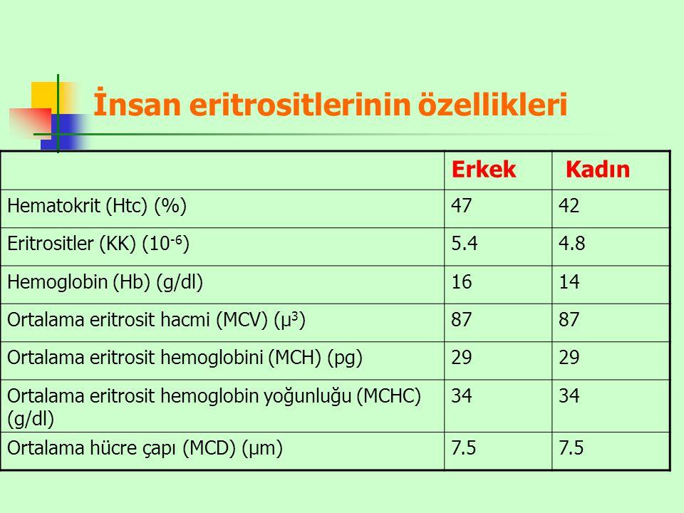 İnsan eritrositlerinin özellikleri