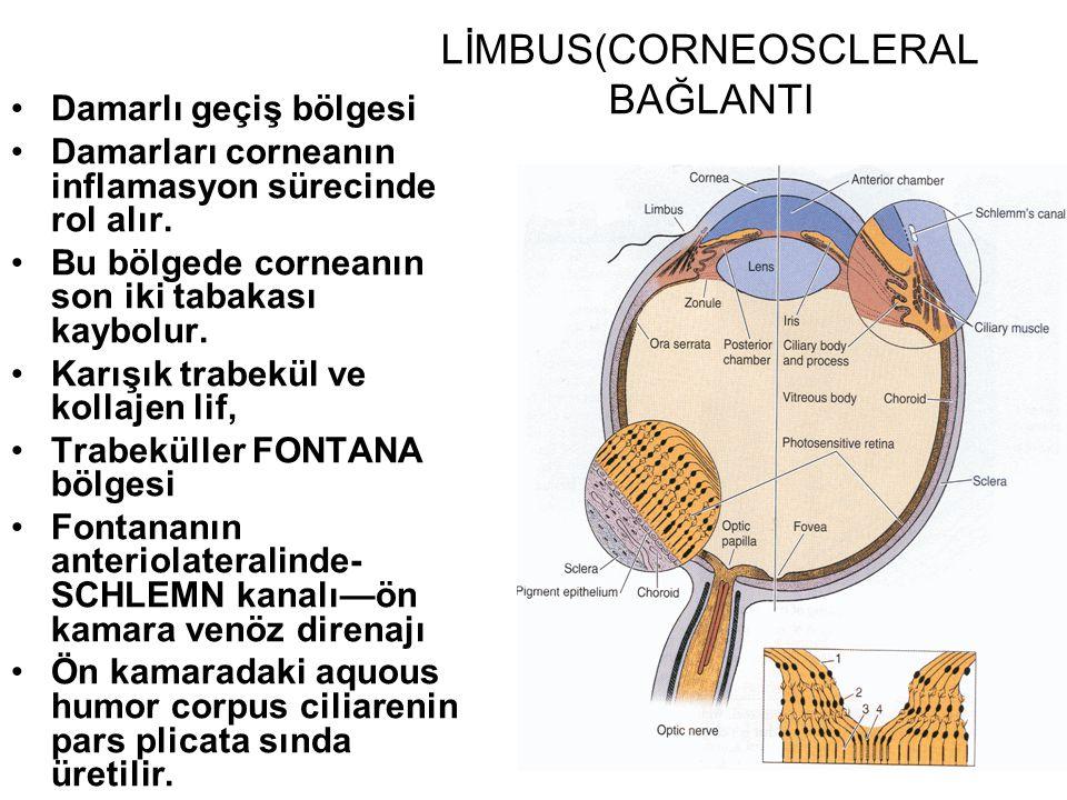 LİMBUS(CORNEOSCLERAL BAĞLANTI